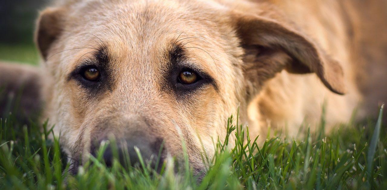 Therapiehundetraining